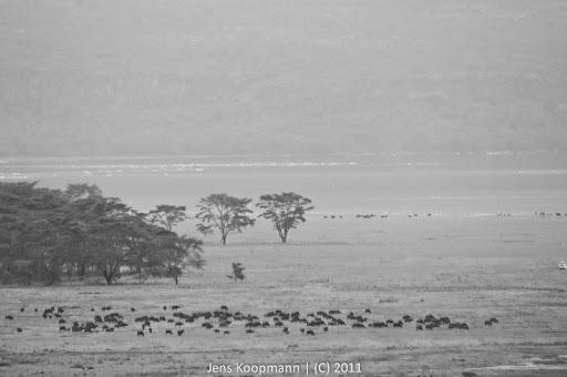 Kenia_20110818_06097