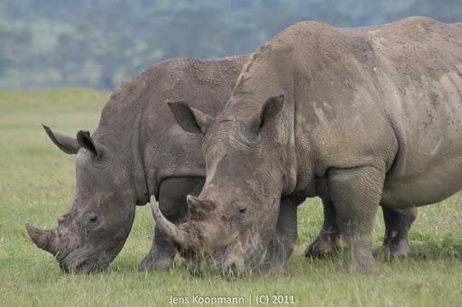 Kenia_20110818_06145
