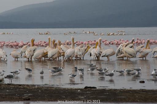 Kenia_20110818_06328