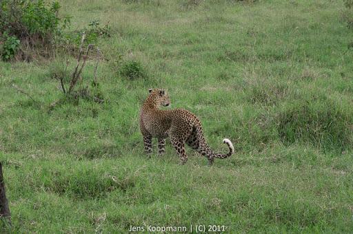 Kenia_20110818_06469