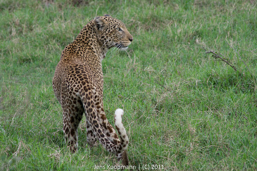 Kenia_20110818_06481