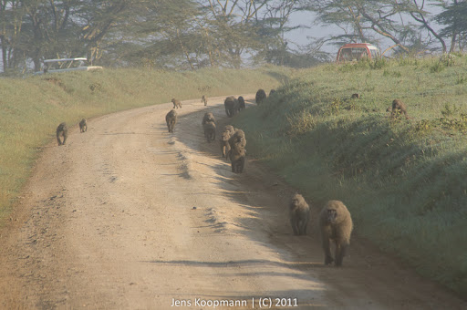 Kenia_20110819_06596
