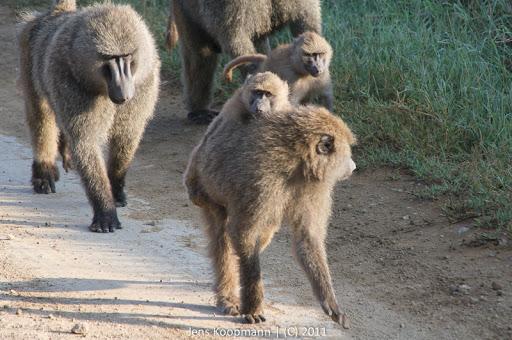 Kenia_20110819_06611