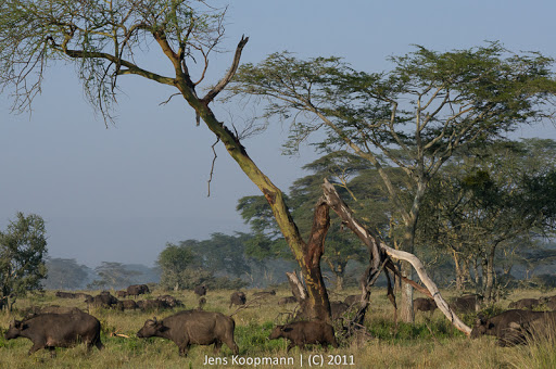 Kenia_20110819_06631