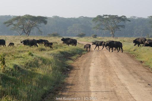 Kenia_20110819_06637