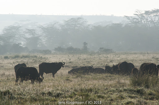 Kenia_20110819_06639