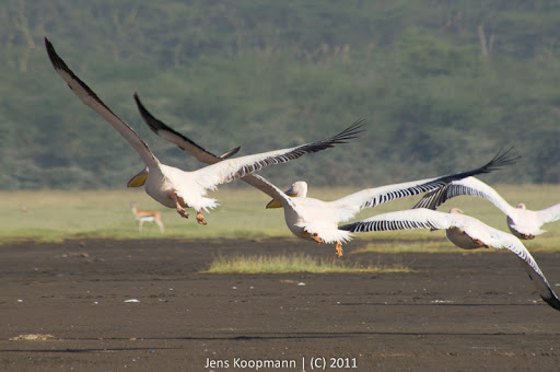 Kenia_20110819_06687