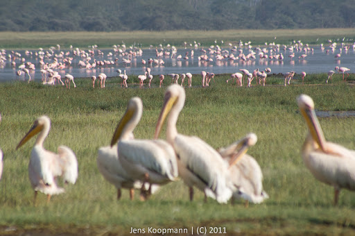 Kenia_20110819_06694