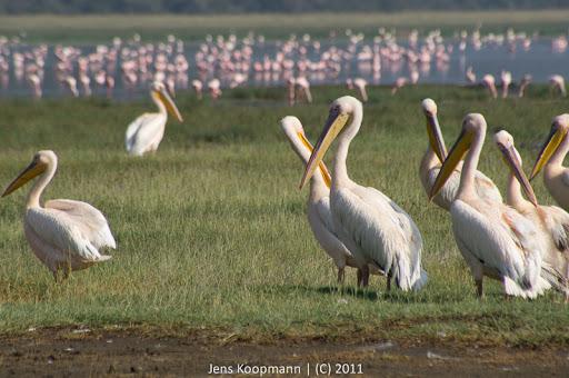 Kenia_20110819_06696