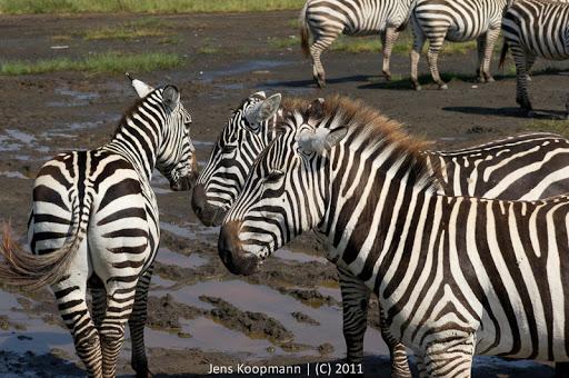 Kenia_20110819_06771