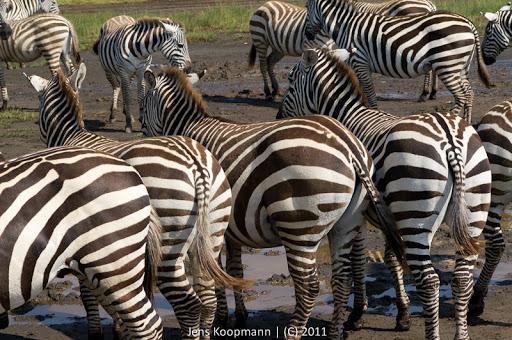 Kenia_20110819_06772