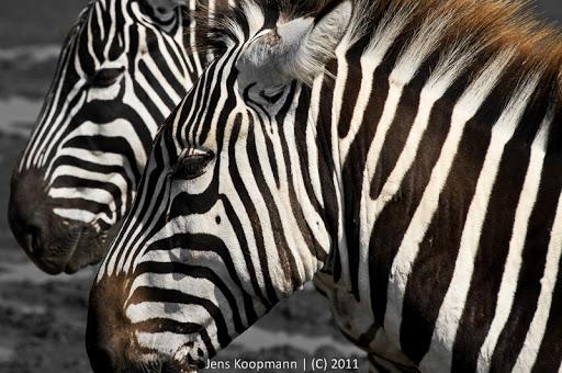 Kenia_20110819_06777
