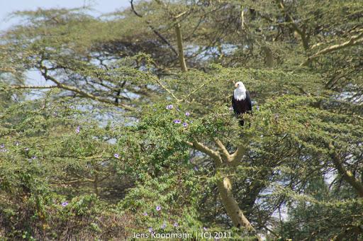 Kenia_20110819_06869