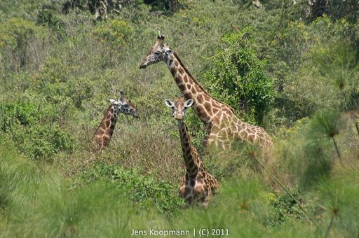 Kenia_20110819_06961