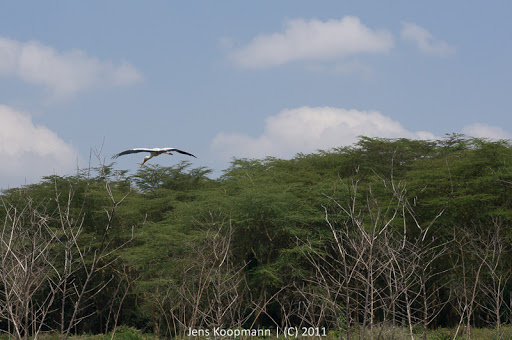 Kenia_20110819_07004