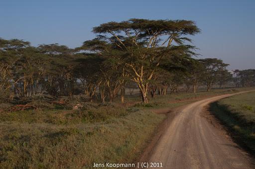 Kenia_20110819_2258