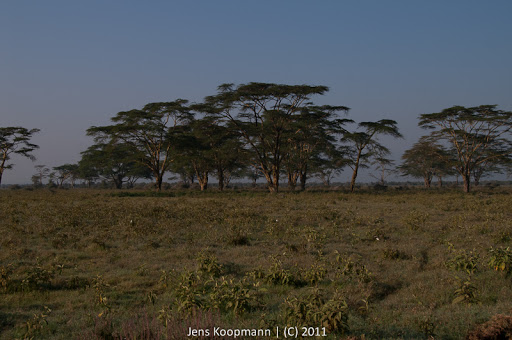 Kenia_20110819_2265