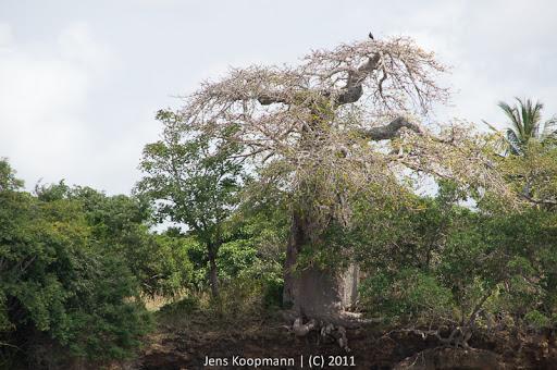 Kenia_20110826_07959