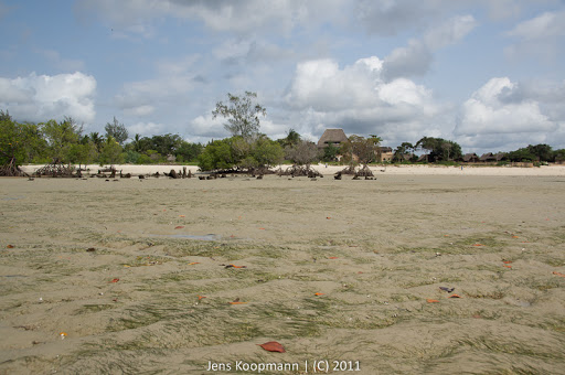 Kenia_20110827_08182