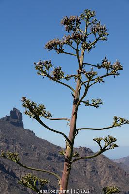 Gran_Canaria-03544.jpg