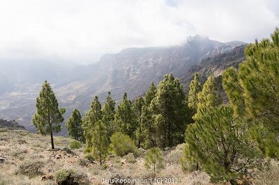 Gran_Canaria-03632.jpg