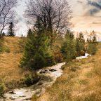 Herbst 2014 – Die Hochmoore von Belgien im Hohen Venn