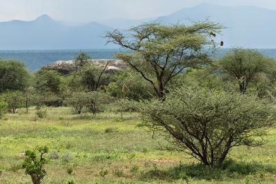 Nairobi-Samburu-02458.jpg