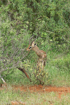 Nairobi-Samburu-02484.jpg