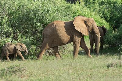 Nairobi-Samburu-02505.jpg