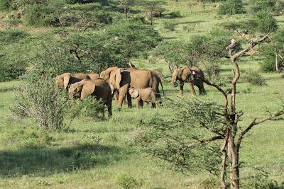 Nairobi-Samburu-02511.jpg