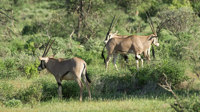 Nairobi-Samburu-02519.jpg
