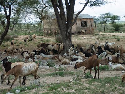Nairobi-Samburu-1120369.jpg
