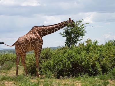 Nairobi-Samburu-1120374.jpg