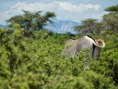 Nairobi-Samburu-1120378.jpg