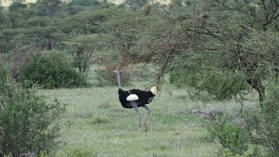 Nairobi-Samburu-1120391.jpg