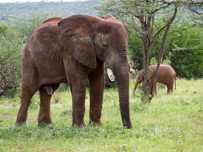 Nairobi-Samburu-1120405.jpg