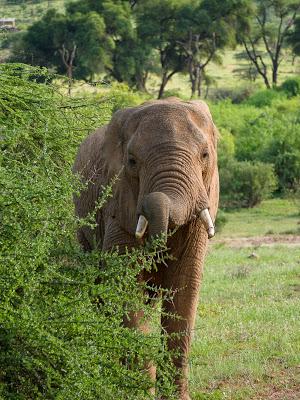 Nairobi-Samburu-1120415.jpg