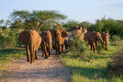 Nairobi-Samburu-1120454.jpg
