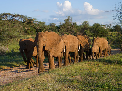Nairobi-Samburu-1120455.jpg