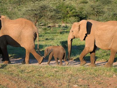 Nairobi-Samburu-1120457.jpg