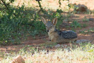 Samburu-02551.jpg