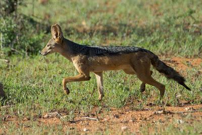 Samburu-02558.jpg