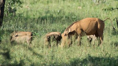 Samburu-02565.jpg
