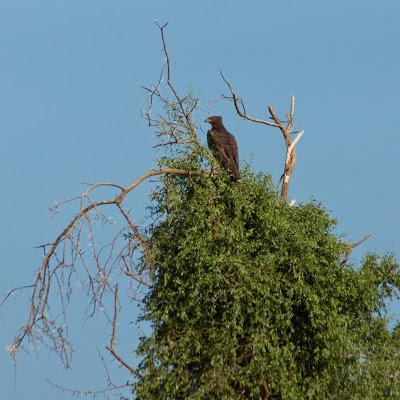 Samburu-02570.jpg