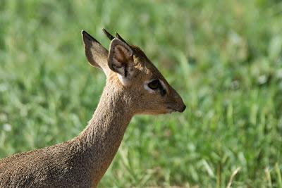 Samburu-02575.jpg