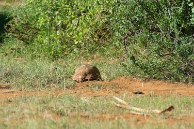 Samburu-02576.jpg