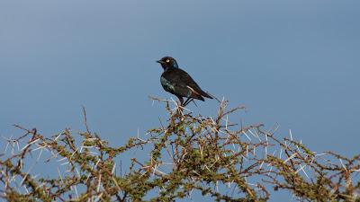 Samburu-02578.jpg