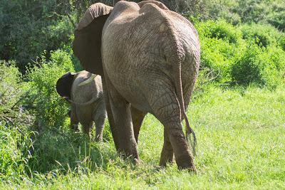 Samburu-02583.jpg