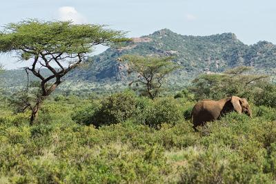 Samburu-02589.jpg