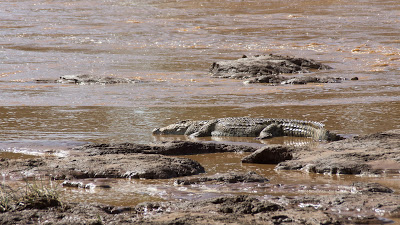 Samburu-02594.jpg